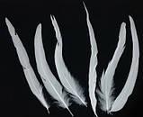 Перо півня Біле 22-30см, фото 3