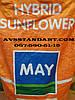 Подсолнечник МЕТЕОР под Евролайтинг,  Семена устойчивы к заразихе и засухе. Купить гибрид Метеор Май Агро Сид.