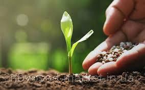 Підживлення садових рослин. Яке добриво вибрати?