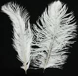 Пір'я страуса Декоративне пір'я Біле 25-30см, фото 7