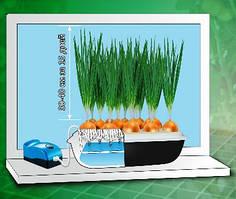 Домашняя гидропонная установка для выращивания зеленого лука ЧУДОРОСТ