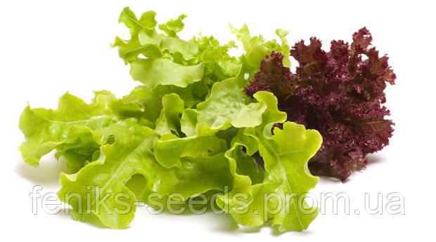 Салат комнатный микс семена