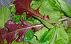 Салат комнатный микс семена, фото 2