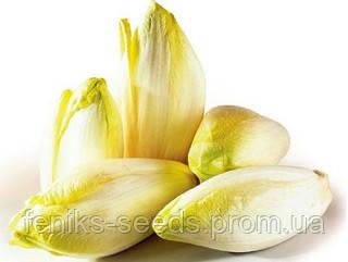 Семена Цикорий