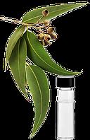 Эфирное масло евкалипта