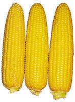 Семена кукурузы Свит Парадайз F1 2500 шт