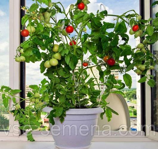 6 овощей, которые вы можете вырастить на подоконнике