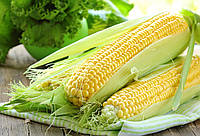 Семена кукурузы «Монсанто» ДКС-2870