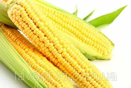 Насіння кукурудзи «Монсанто» ДКС-3795