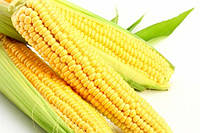 Семена кукурузы «Монсанто» ДКС-3795