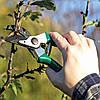 Как правильно провести обрезку вишневого дерева в начале весны?