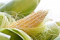 Насіння кукурудзи «Монсанто» ДКС-3507