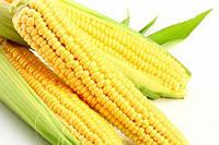 Семена кукурузы «Монсанто» ДКС-3705