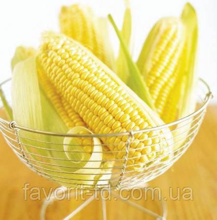 Насіння кукурудзи «Монсанто» ДКС-4590