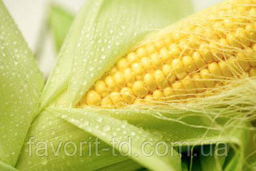 Насіння кукурудзи «Монсанто» ДКС-4964