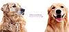 Расческа, щетка для удаления шерсти у собак и кошек., фото 6