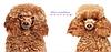 Расческа, щетка для удаления шерсти у собак и кошек., фото 7