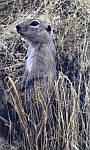 Демісезонний одяг для риболовлі та полювання - Anvi -5°C - Ховрах (тканина Алова), фото 7