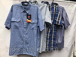 Сорочки чоловічі БАТАЛОВ