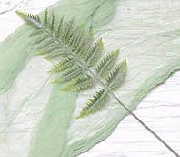 Лист папороті зелений