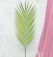 Лист пальми