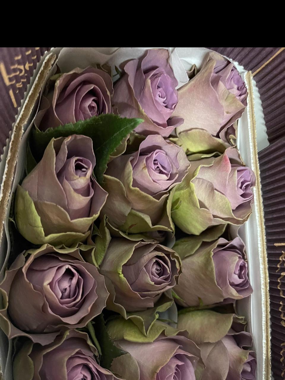 Роза Тіара 60 см