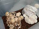 ГРИБАРИУМ. Гроубокс для вирощування грибів, фото 3