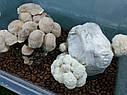 ГРИБАРИУМ. Гроубокс для вирощування грибів, фото 7