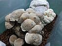 ГРИБАРИУМ. Гроубокс для вирощування грибів, фото 8