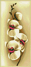 АМП-138. Орхідеї. Алмазна мозаїка