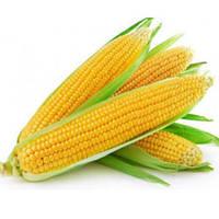 Турбин Ф1 5000 сем. кукуруза Clause