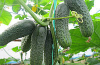 Семена огурца Каролина F1 100 шт (развес)
