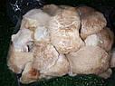ГЕРИЦИУМ ГРЕБЕНЧАТЫЙ сушеный (Ежовик) Hericium erinaceus, фото 5