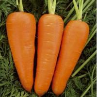 Семена моркови Ред Коред 0,5 кг