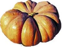 Семена тыквы Вест 0,5 кг