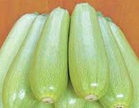 Семена кабачка Немо F1 0.5 кг