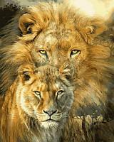 Картины по номерам 40×50 см Babylon Лев и львица (VP 1361)