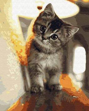 Картини за номерами 40х50 см Brushme Маленький котик (GX 29845)