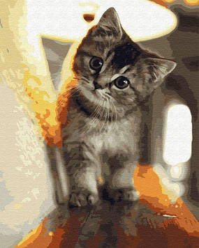 Картины по номерам 40х50 см Brushme Маленький котик (GX 29845)