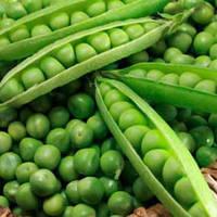 Семена гороха Тиара 100 000 шт (19 кг) Lark Seeds Ларк сидс