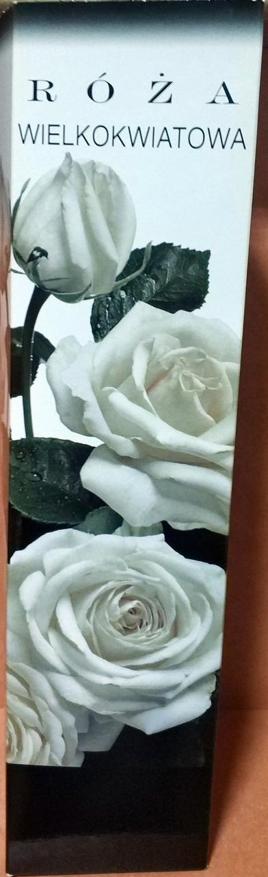 Троянда великовіткова біла 1шт