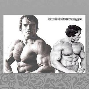 Плакат Арнольд Шварценеггер 16