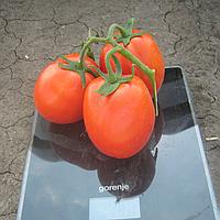 КАЛИСТА F1 - томат, Hazera, фото 1