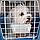 Переноска для кошек и мелких собак Ferplast ATLAS OPEN, фото 4