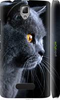 """Чехол на Lenovo A2010 Красивый кот """"3038c-216-7673"""""""
