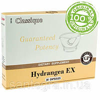 Hydrangea EX (Сантегра - Santegra) Гортензия - для здоровья мочевыделительной системы, фото 1