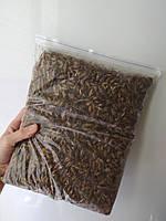 Кормовые сверчки для стрижа, различных птиц, рептилий и др животных. 1 кг. Заморозка