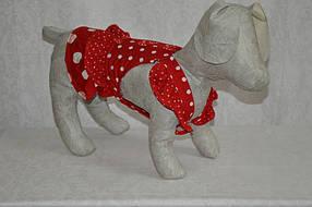 Горошок Такса сарафан для собак ліквідація , фото 2