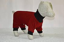 Трикотаж бебі комбінезон для собак ліквідація , фото 2
