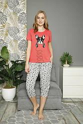 Комплект женский (футболка короткий рукав+бриджи),  х/б,  Nicoletta  (размер L)